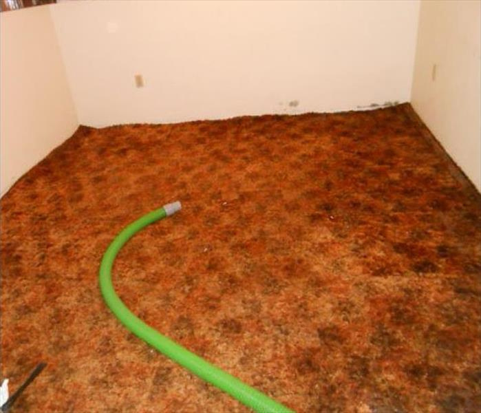 orange carpet wet, green hose removing remaining pooling water, small room